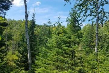 Recherche forêts pour la cueillette de champignons