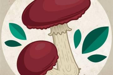Recherche matériel pour la culture de champignons