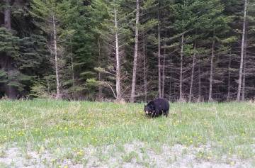 Recherche territoire pour faire de la chasse