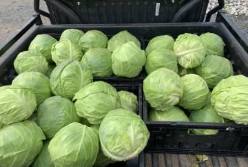 Légumes sans produits chimiques